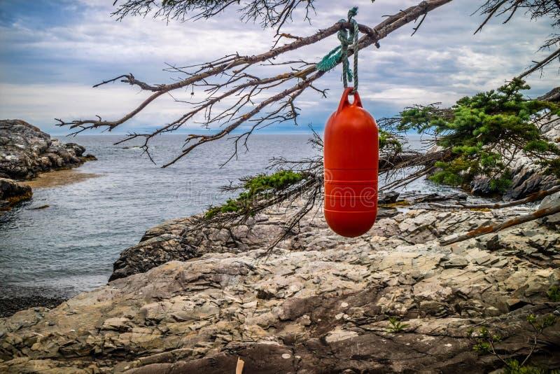 Um cair do para-choque do barco na árvore do au Haut de Duck Harbor Isle fotografia de stock royalty free