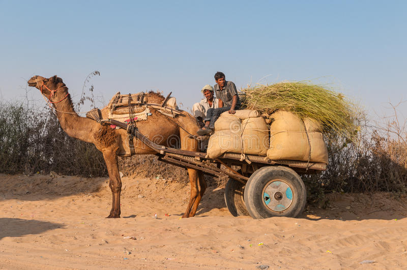 Um camelo com os dois homens e sacos indianos em um reboque foto de stock