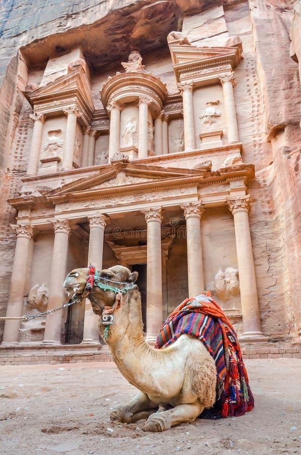 Um camelo descansa na frente do Tesouraria, PETRA, Jordânia imagem de stock
