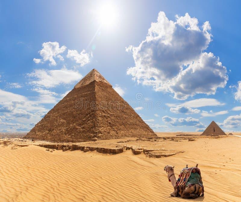 Um camelo perto da pirâmide de Khafre e da pirâmide de Menkaure no fundo, Giza, Egito imagens de stock