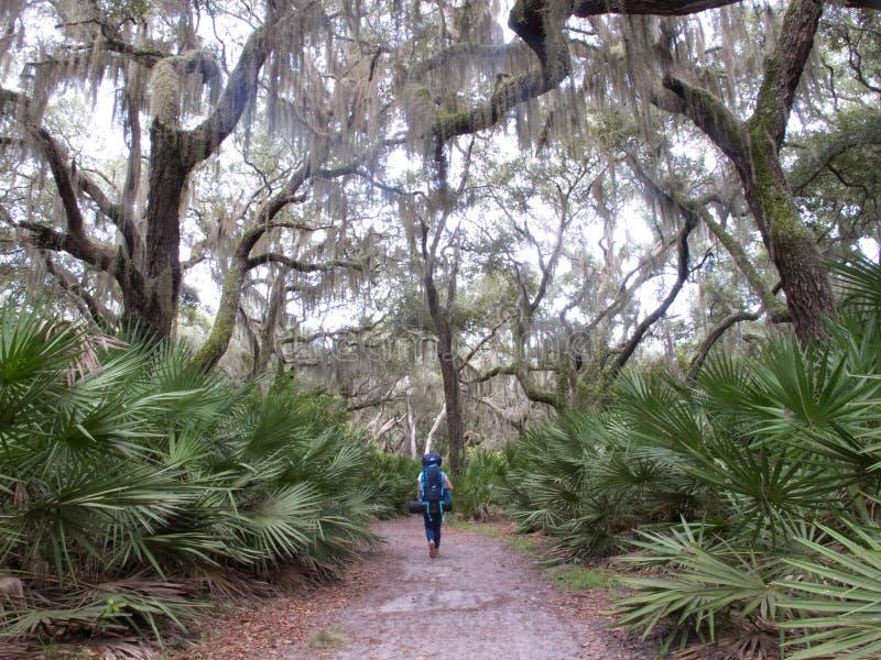Um caminhante que anda no litoral do nacional da ilha de Cumberland foto de stock