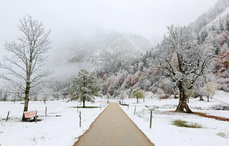 Um caminho através do prado com as árvores de bordo cobertas pela primeira neve em uma manhã sombrio nevoenta imagem de stock royalty free
