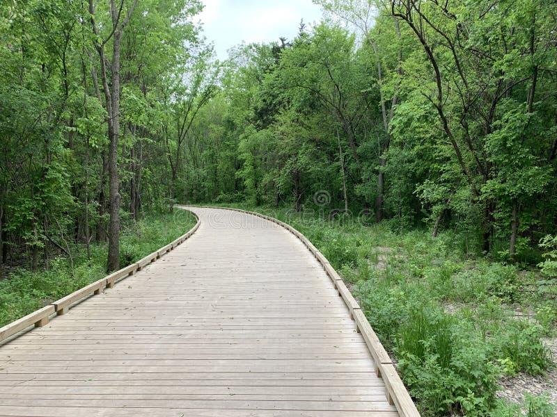 Um caminho de madeira na natureza foto de stock