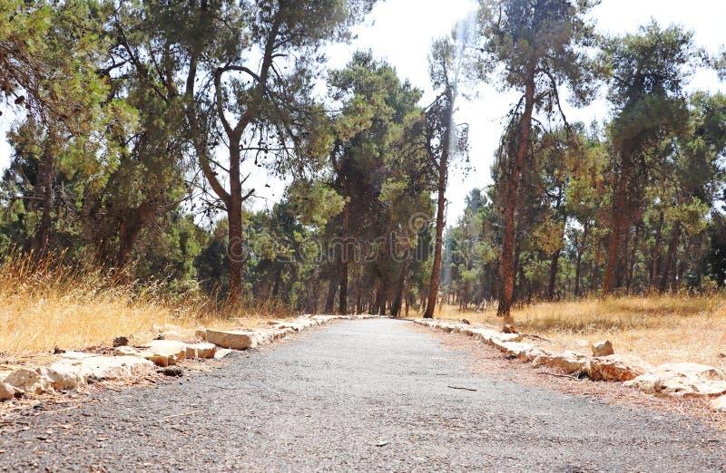 Um caminho pavimentado na floresta fotografia de stock