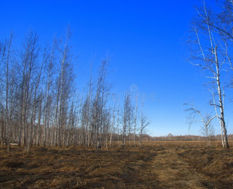 Um campo apenas cancelado da neve, terra arável de espera A imagem foi tomada sob a luz natural imagens de stock
