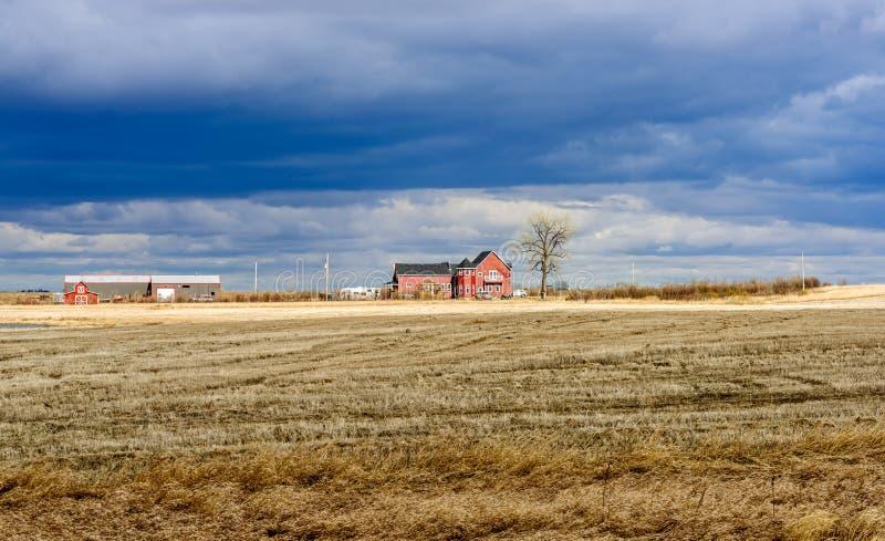 Um campo chanfrado amarelo, uma casa da quinta vermelha com um carro, um t murcho fotos de stock royalty free