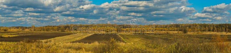 Um campo chanfrado contra um fundo de árvores altas na distância e um céu azul infinito com nuvens brancas imagem de stock