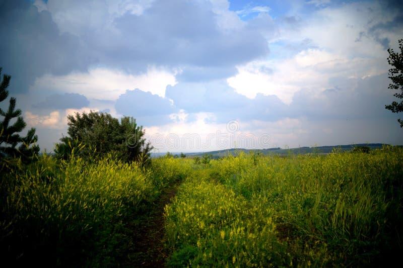 Um campo com flores amarelas sob um céu pesado fotografia de stock
