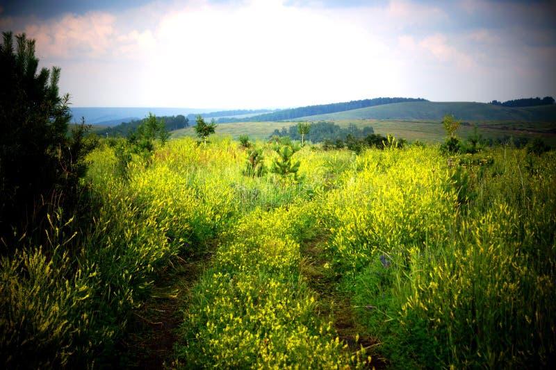 Um campo com flores amarelas sob um céu pesado imagens de stock
