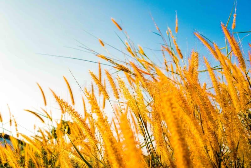 Um campo da grama e da luz solar da missão sob o céu fotos de stock royalty free