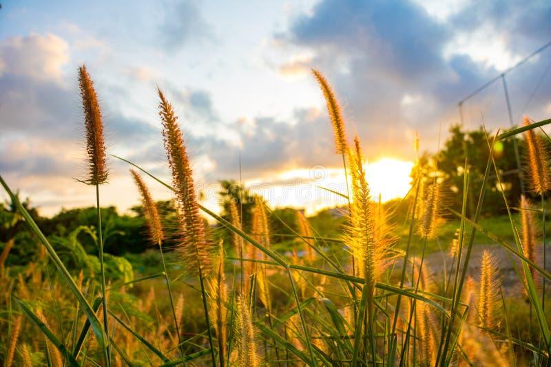 Um campo da grama e da luz solar da missão sob o céu fotografia de stock royalty free