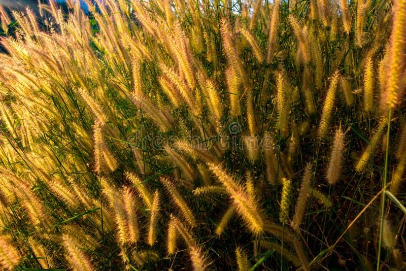 Um campo da grama e da luz solar da missão sob o céu foto de stock royalty free