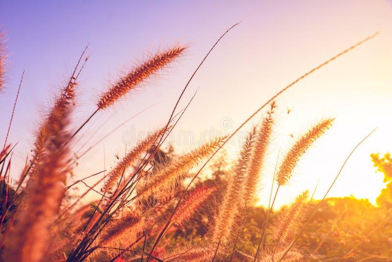 Um campo da grama e da luz solar da missão sob o céu foto de stock