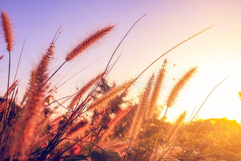 Um campo da grama e da luz solar da missão sob o céu fotografia de stock