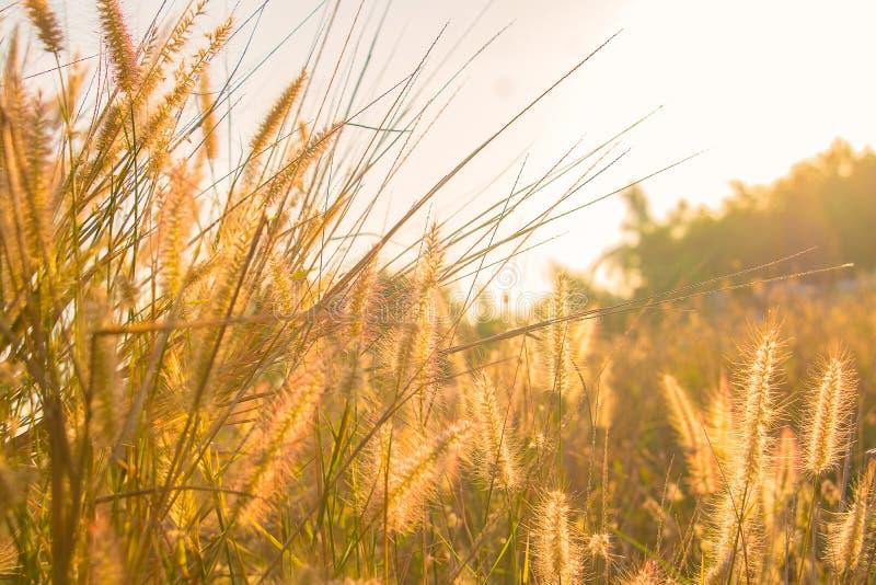 Um campo da grama da missão foto de stock