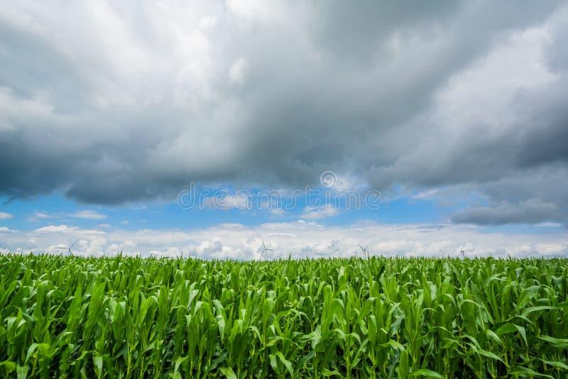 Um campo de exploração agrícola em Indiana rural imagem de stock