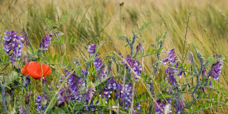 Um campo de flor Opini?o do close up Cores da mola e do verão fotografia de stock royalty free