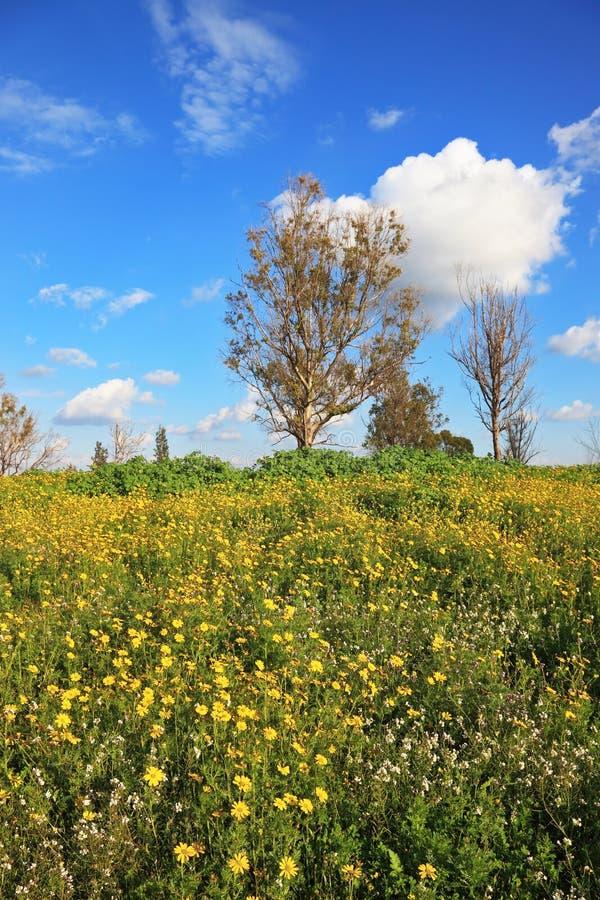 Um campo de florescência da mola maravilhosa imagens de stock royalty free