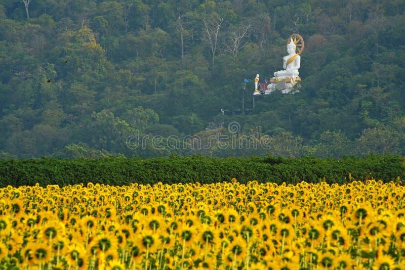 Download Um Campo Dos Girassóis Com A Estátua Branca De Buddha, Tailândia Foto de Stock - Imagem de flora, alaranjado: 29849440