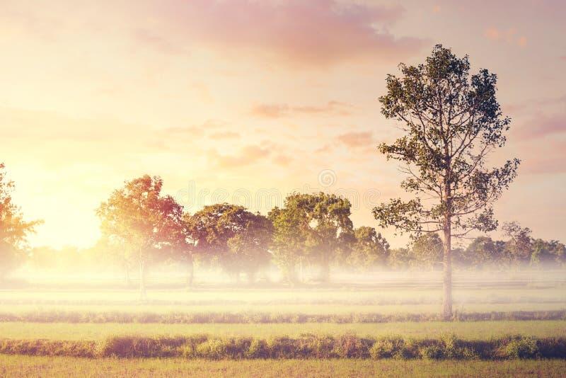 Um campo e um céu e uma névoa na manhã fotografia de stock