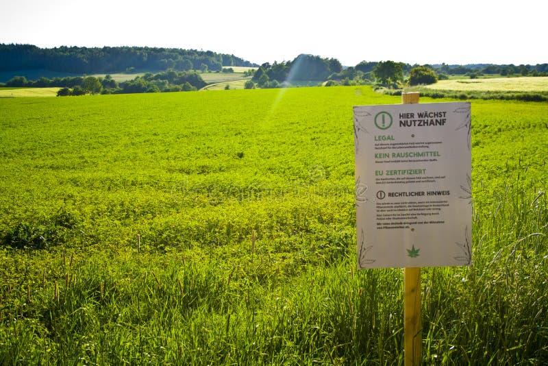 Um campo em Hesse, m Alemanha do cânhamo Cultivo legal do cânhamo para a medicina ou o alimento imagens de stock