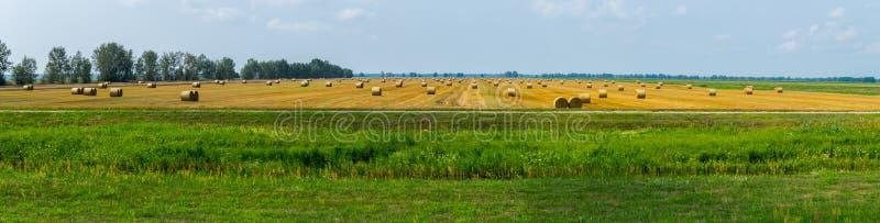 Um campo enorme com muito chanfrado e recolhido em uma pilha de grama fotos de stock