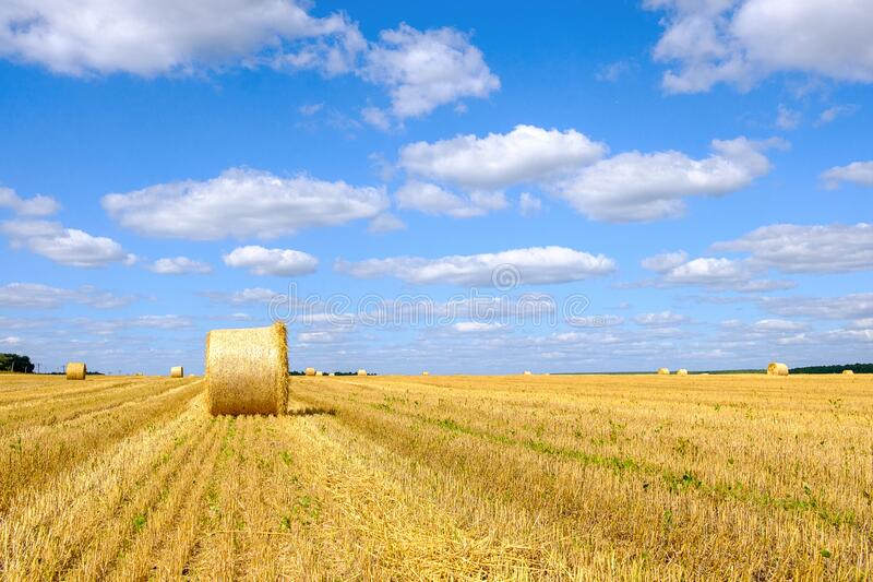 Um campo que se estende pelo horizonte sobre ele um fardo de feno o céu é azul foto de stock