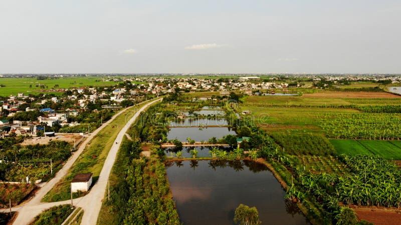 Um campo rico e afluente em um dia ensolarado bonito foto de stock royalty free