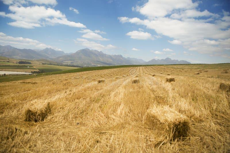 Um campo vasto de pilhas do feno com montanhas e nuvens no fundo fotos de stock