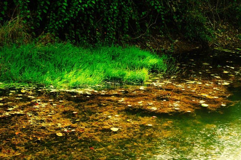 Um canto de um lago do outono imagem de stock royalty free