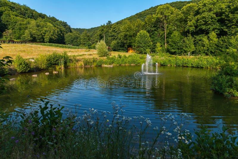 Um canto verde bonito da natureza cercado por florestas densas com uma lagoa pequena com uma fonte quieto e bonito fotos de stock