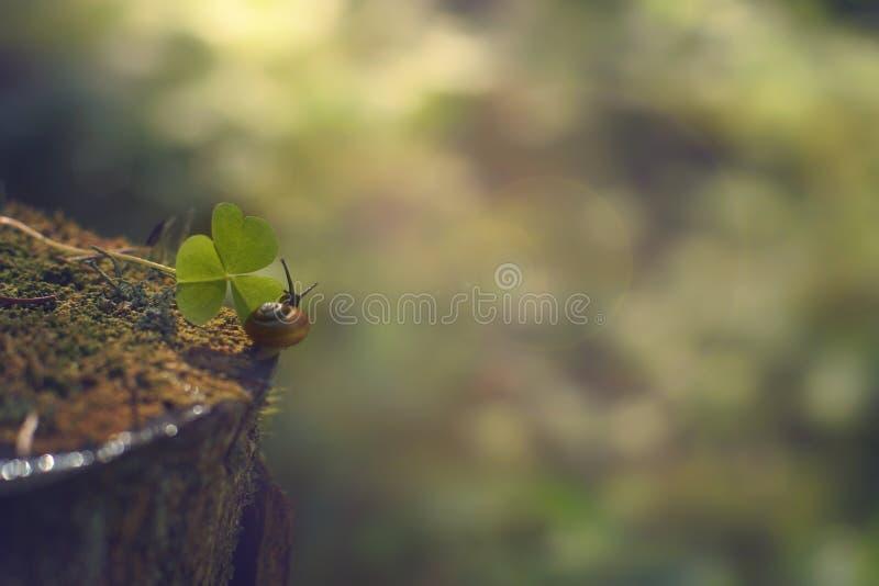 Um caracol pequeno rasteja ao longo do coto na direção da folha verde na floresta da manhã, verão imagens de stock royalty free