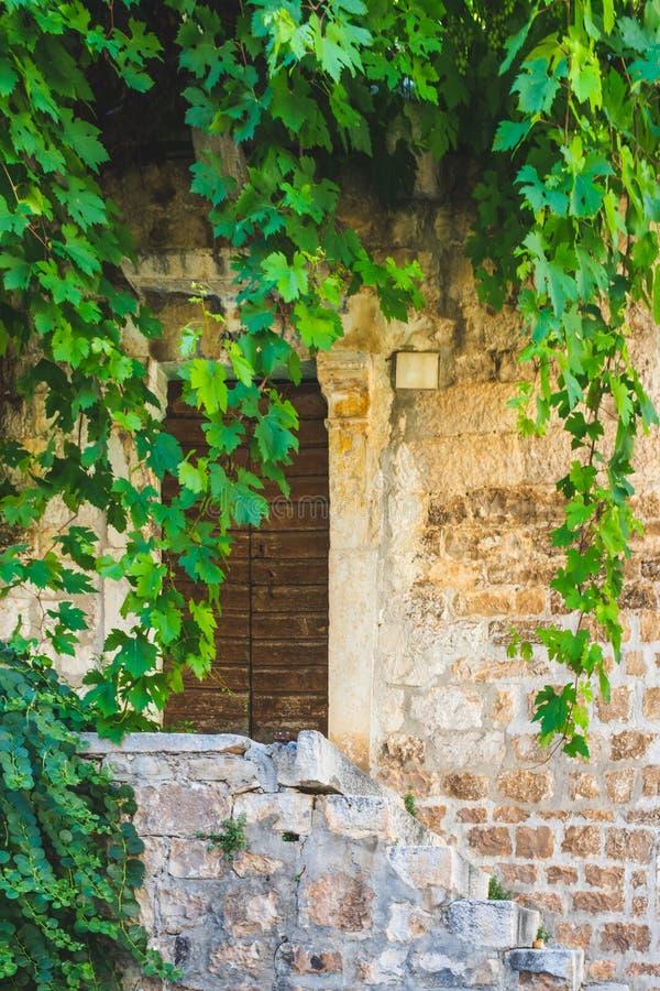 Um caramanchão de vinhas sobre uma entrada da porta a uma casa de pedra velha em Dalmácia, na Croácia, Europa foto de stock