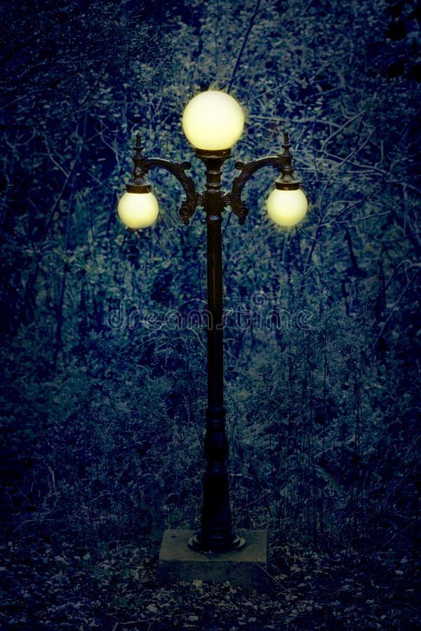 Um cargo da lâmpada no meio das madeiras, em um dia maçante e aborrecido fotografia de stock royalty free