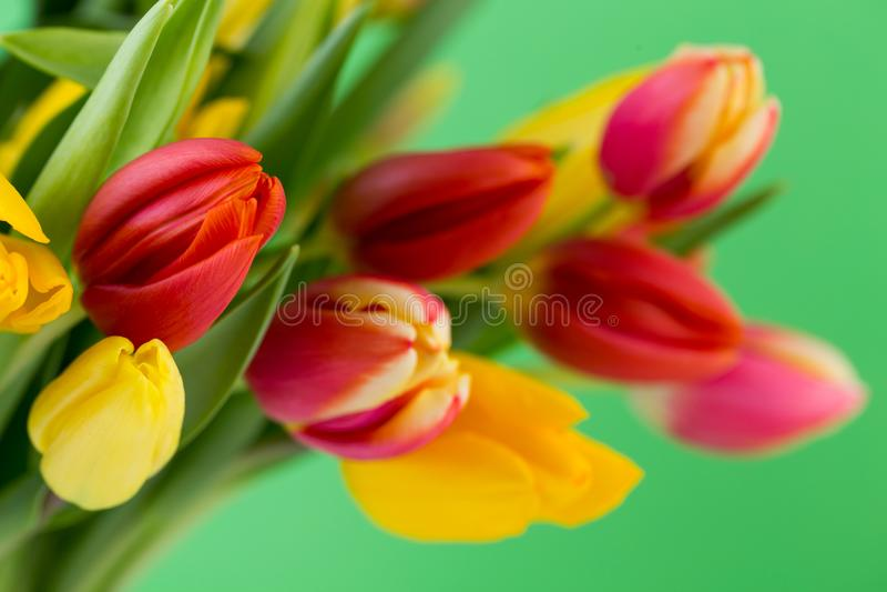 Um cartão de cumprimentos colorido da mola com as tulipas para a Páscoa, ` da mãe fotografia de stock