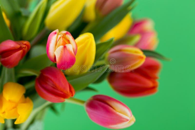 Um cartão de cumprimentos colorido da mola com as tulipas para a Páscoa, ` da mãe imagem de stock royalty free