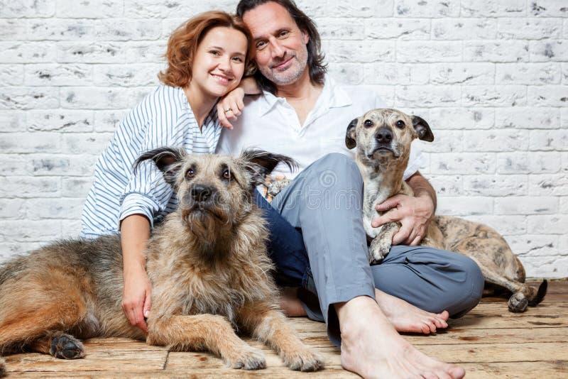 Um casal feliz com seus cães, um retrato da semente, amor, c imagem de stock royalty free