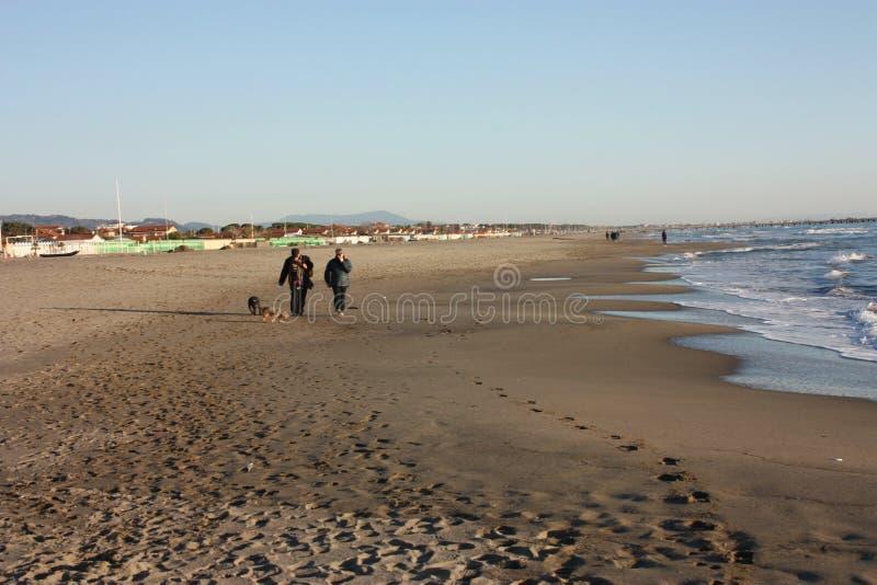 Um casal idoso dá uma volta sereno na praia no por do sol com seu cão fiel do animal de estimação foto de stock