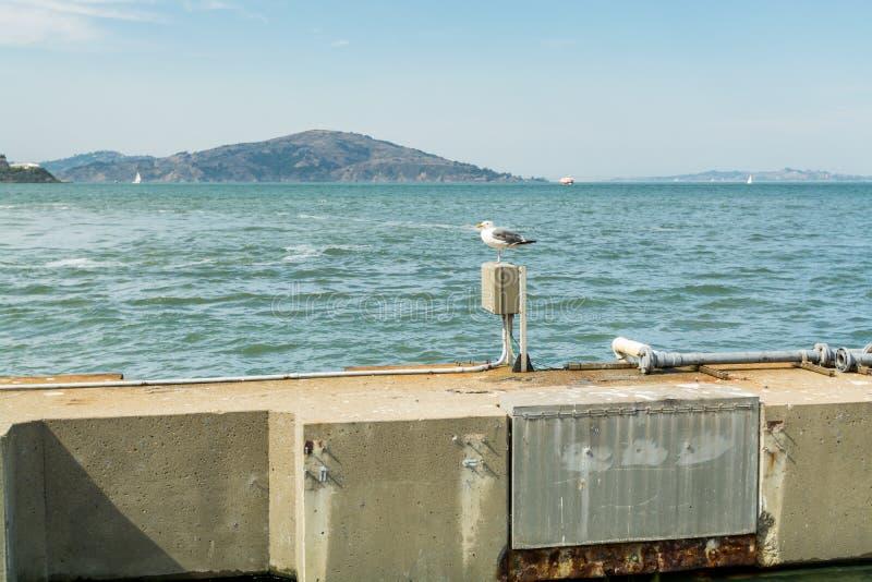 Um casco com casco de anéis que penetra na beira-mar do Cais 39 do pescador em São Francisco, Califórnia, Estados Unidos da Améri fotos de stock royalty free