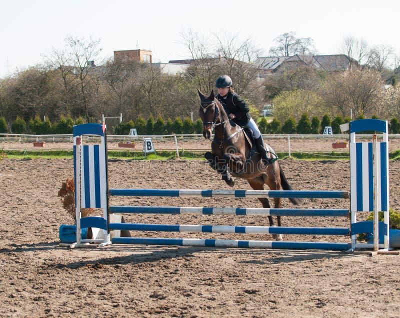 Um cavaleiro caucasiano do cavalo da menina que monta e que salta um obstáculo com seu pônei marrom bonito do esporte imagem de stock royalty free