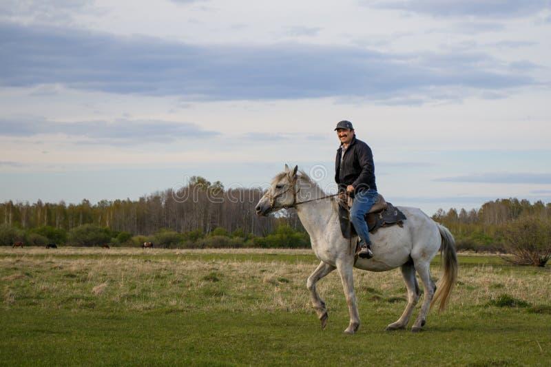 Um cavaleiro em um cavalo branco no campo imagens de stock royalty free