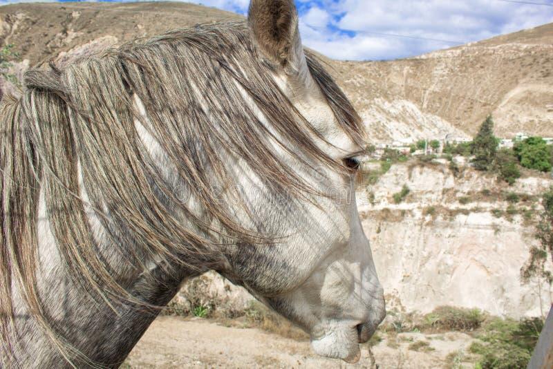 Um cavalo cinzento na natureza, no fundo de uma montanha e de uma paisagem bonita fotos de stock