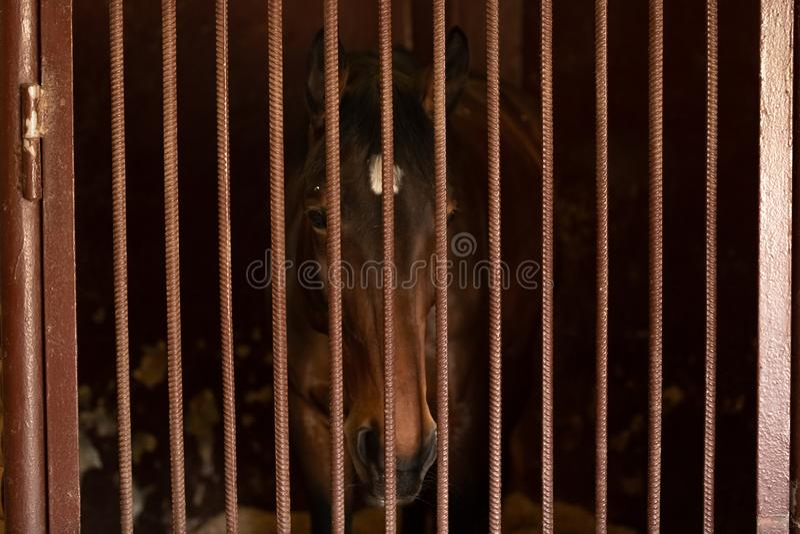 Um cavalo com olhos bonitos olha fixamente fora na dist?ncia Podia ser um cavalo s? triste fotografia de stock