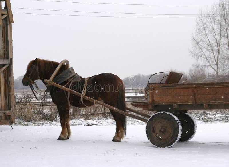Um cavalo de condado do russo foto de stock