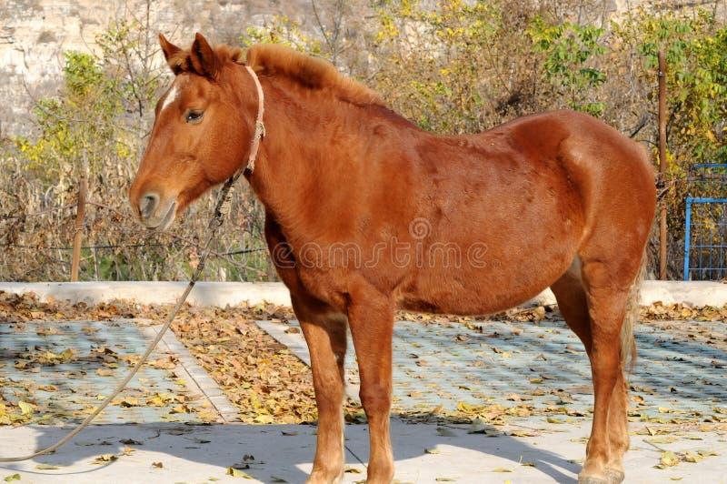 2019111421: Um cavalo de jujujuba na área cênica de Shidu, Pequim, China fotografia de stock