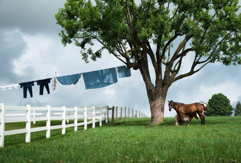 Um cavalo e um pônei mostram com um lado da lavanderia de Amish fotos de stock