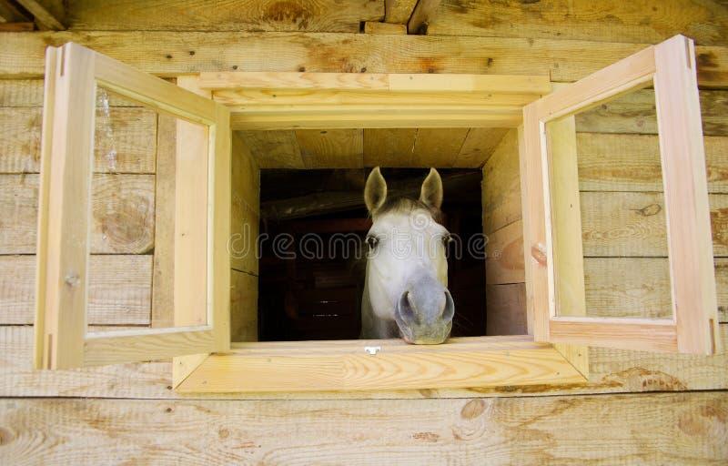 Um cavalo no indicador imagem de stock