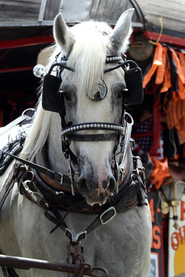 Um cavalo puxa um transporte com antolhos foto de stock