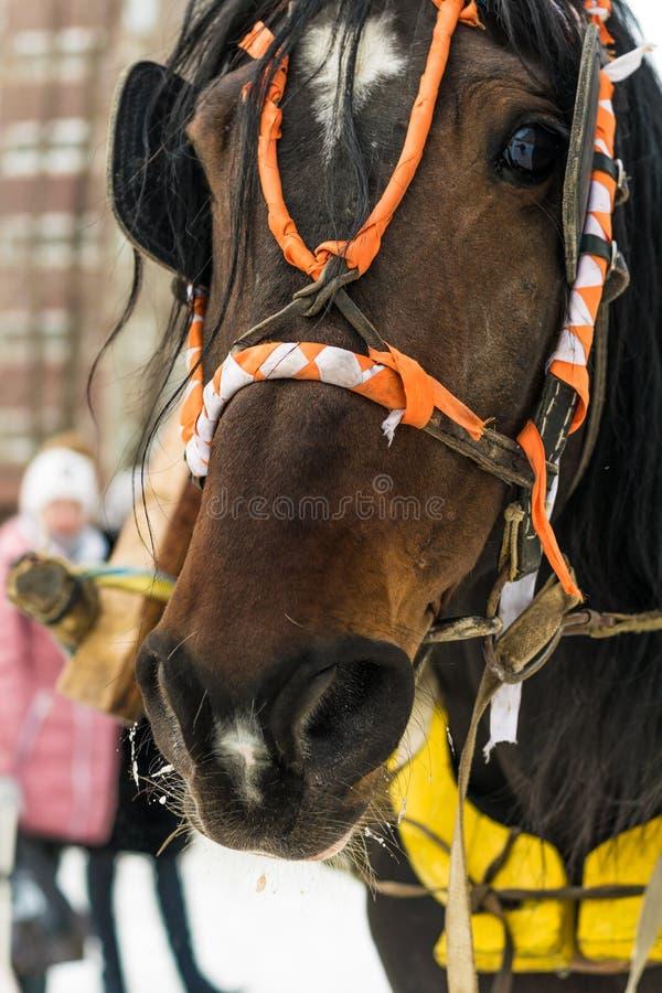 Um cavalo vestido por um feriado foto de stock