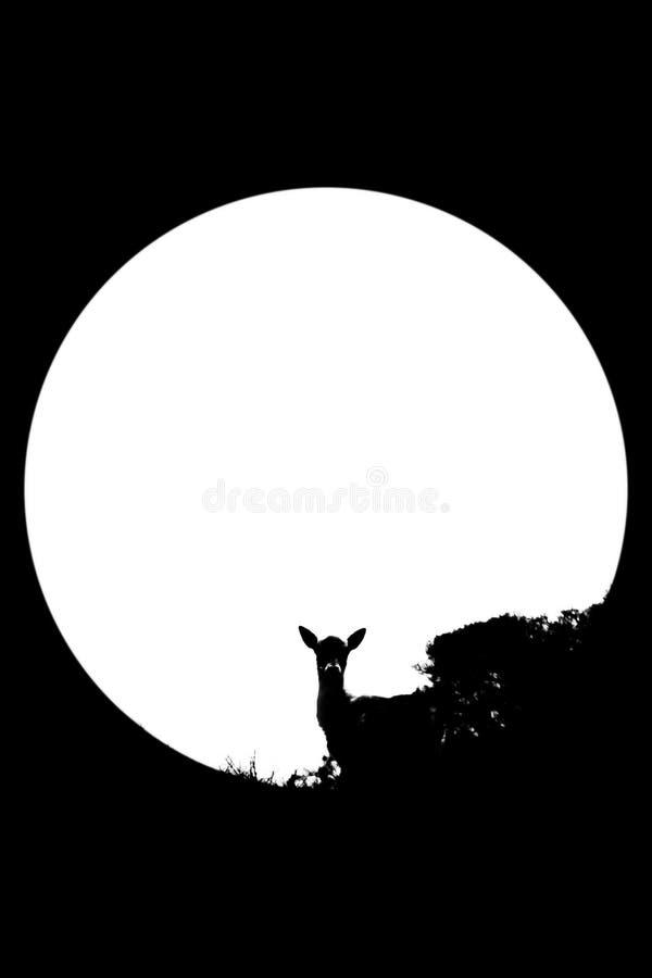 Um cervo e a lua em preto e branco imagens de stock royalty free